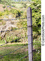Barbed wire fence protecting a pasture