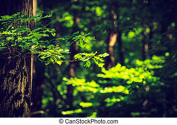 Sunlight breaking through trees - Nature foliage outdoor...