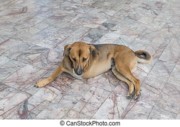 Defect dog with three legs - Defect Thai brown dog with...