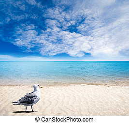 Seagull on Sandy Beach With Gentle Waves and Sunny Skies