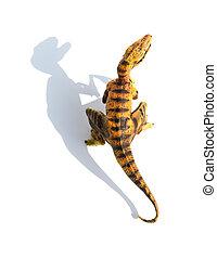 Velociraptor, juguete, cima, amarillo, Plano de fondo,...