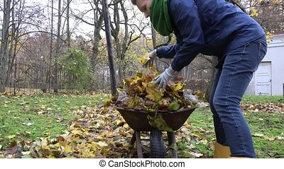 tired woman load leaves to barrow and carry in house...