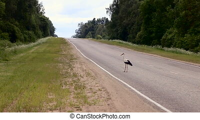 large stork takes off from the ground by the road, which is...