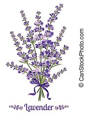 Beautiful bouquet of lavender flowers. Botanical illustration.