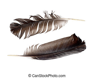 black feathers isolated on white background