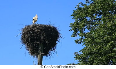 one stork in the nest on a pole against a blue sky