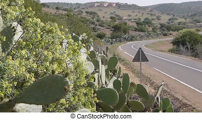 road with cactus