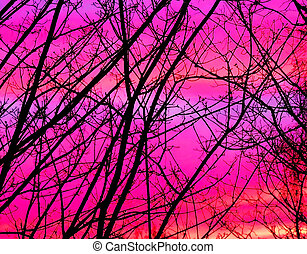 Trees in the afterglow.