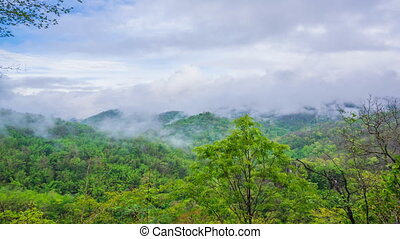 Tropical rain forest with a mist