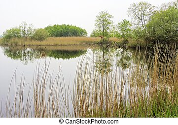 Nature Reserve - A nature reserve from the Avalon Marshes in...