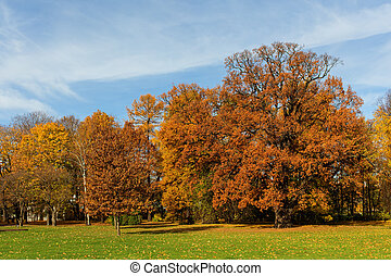 autumn park with deciduous trees - sunny landscape in autumn...