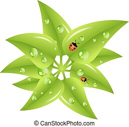 Green leaves with dew drops and ladybugs