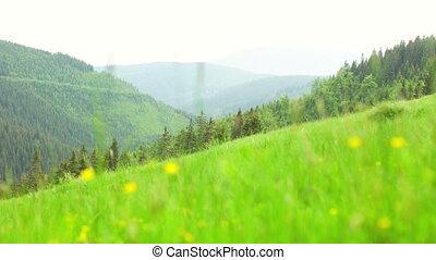 Green Grassed Field in Krkonose Mountain