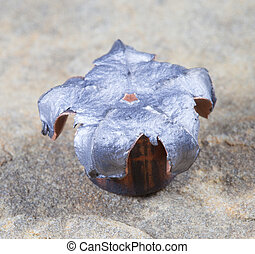 Hollow point - Copper plated hollow point bullet mushroomed...