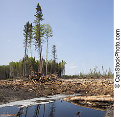Forest clearing - Puddle in a forest clear cut in...