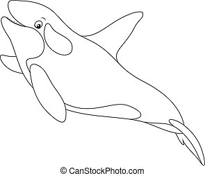 Killer whale - Black and white vector illustration of an...