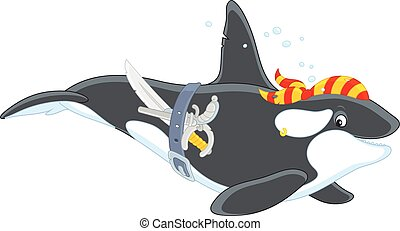 Killer whale pirate - Vector illustration of an orca...