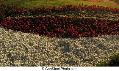 Flower Garden in city park - In city park beautiful flower...