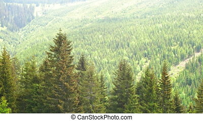 View at the Forest in the Krkonose National Park - Slow...