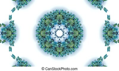 blue butterfly circle pattern
