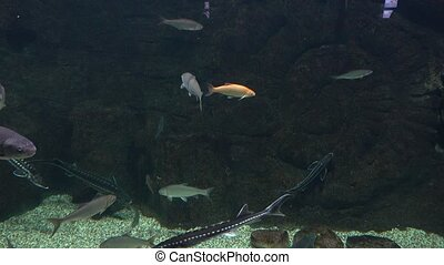 Various fishes floating in a huge water tank against dark...