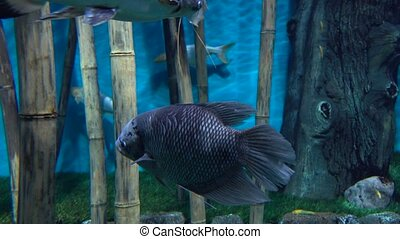 Fishes floating between bamboo stems against blue background...