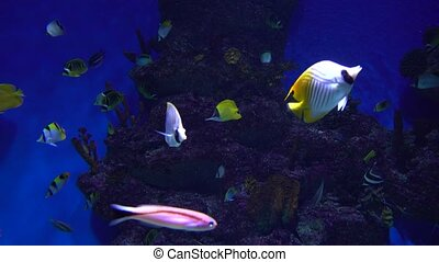 Many different fishes floating in a huge water tank against blue background. 4K