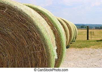 Rows of Hayrolls near Fenced Pasture - Large hayrolls lined...