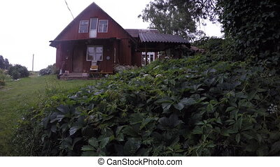 Rural village homestead house and rain drops fall on creeper...