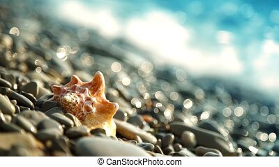 Conch shell on beach - Conch shell on pebble beach