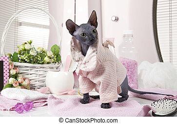 Don Sphinx kitty dressed in pajama - Two months old purebred...