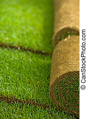 Turf grass rolls in a row partially unrolled - shallow depth...