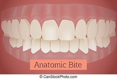 Teeth Bite vector - Anatomic bite concept. Medical...