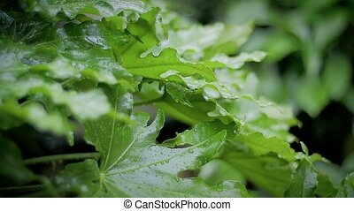 heavy rain in a garden slow motion