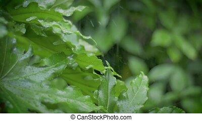 heavy rain in a garden
