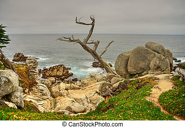 Big Sur California - Deaed tree and coastline Big Sur...