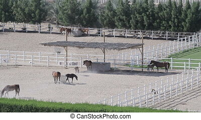 horses in corral on farm landscape. Top view of stud