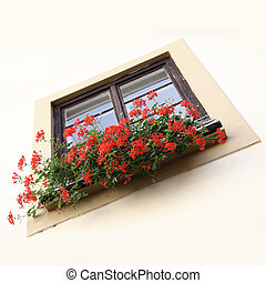 Flowerpot on a window sill with red flowers