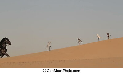 Arabian horse rider riding on desert in Dubai - Arabian...