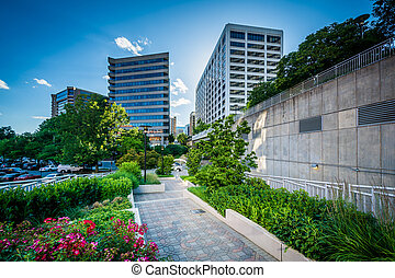 Gardens along a walkway and modern buildings in Rosslyn,...