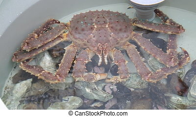 Large pink crab are sitting in a tank at the fish market.