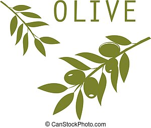 olive - vector olive branches green