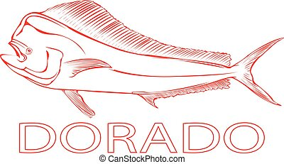 Dorado. - Outline of a Dorado fish