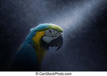 Blue yellow parrot macaw - Close up of Blue yellow parrot...