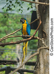 Blue yellow parrot macaw - Blue yellow parrot macaw are...