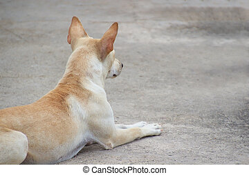 Lonely dog waiting and crouched on ground - Closed up lonely...
