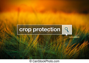 Cosecha, protección, en, internet, Examinador, búsqueda,...