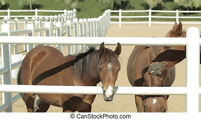 young brown horses in the corral