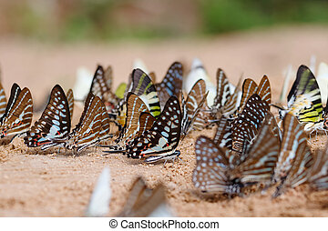 Diversity of butterfly species