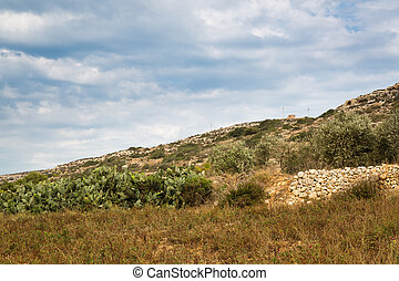 Stony land in Malta - Reclamation of stony soil on the...